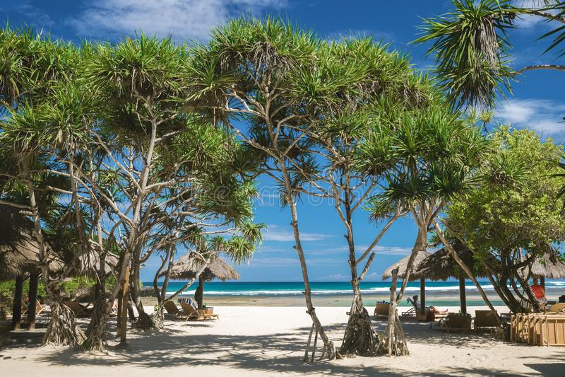 Wit zandstrand, tropische bomen Toerisme, Bali stock fotografie