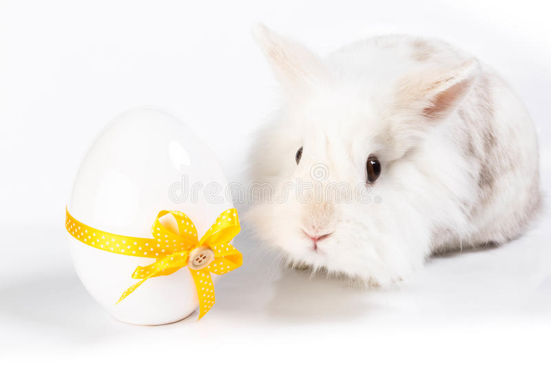 Wit zoet konijn royalty-vrije stock fotografie
