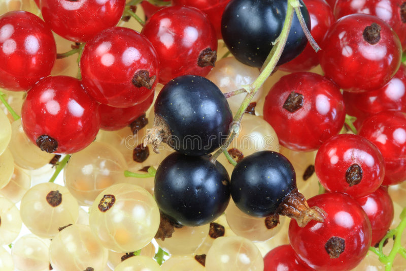 Wit, zwarte en rode aalbessen. stock afbeeldingen