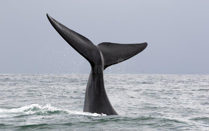 witamy w wieloryb fotografia royalty free