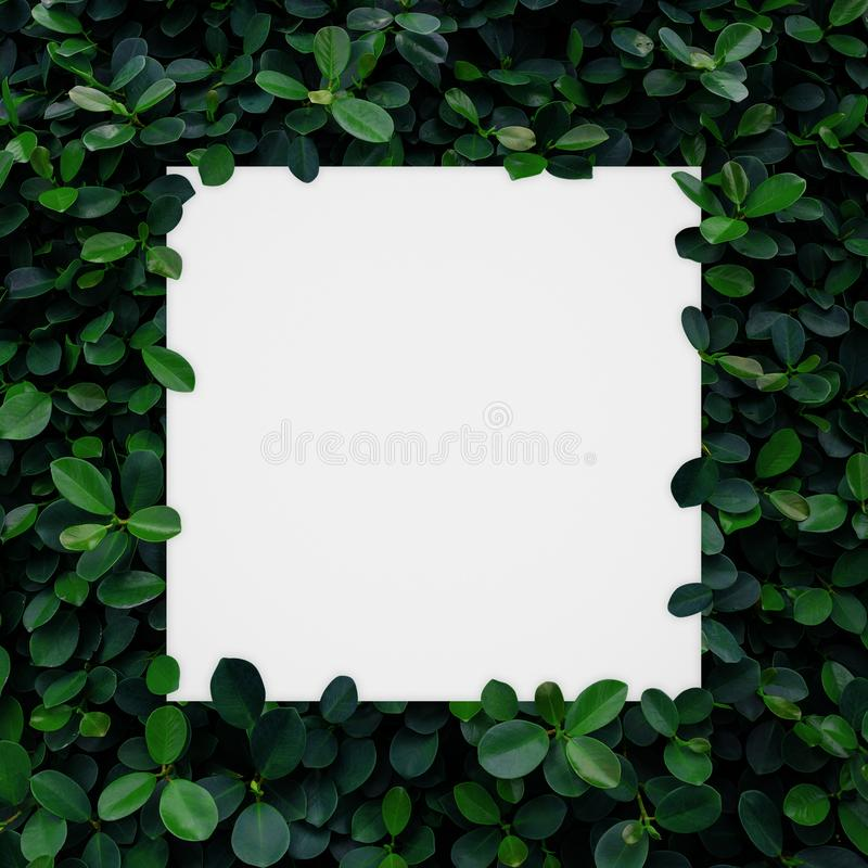Witboekkader op groene bladerenmuur stock illustratie