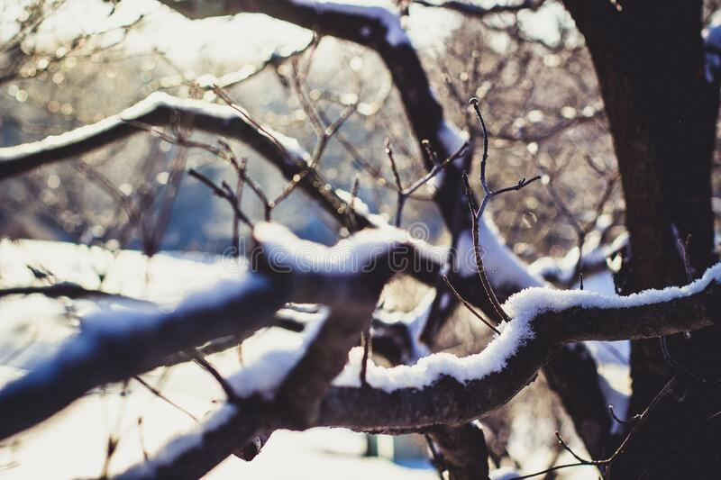 Wither Tree With Snow On Branch Free Public Domain Cc0 Image