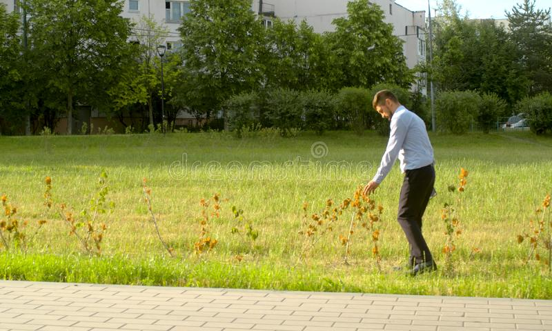 Withered bushes in public park that were planted wrong. Withered bushes that were planted wrong. Ecological inspector controlling the planting of the shrub stock photos