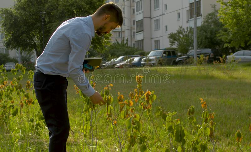 Withered bushes in public park that were planted wrong. Withered bushes that were planted wrong. Ecological inspector controlling the planting of the shrub royalty free stock photos