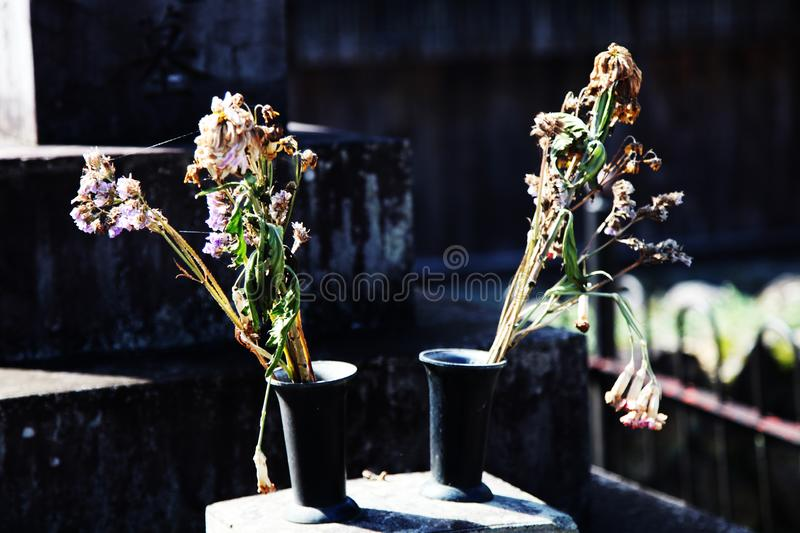Dried flowers in two vases stock images