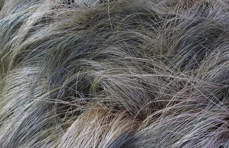 Download Withered grass stock image. Image of nature, background - 15721573