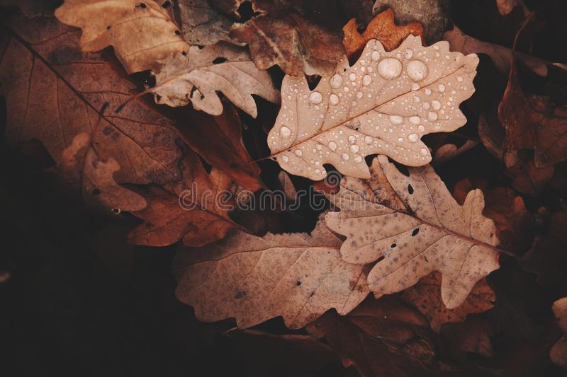 Withered Leaves Photo royalty free stock images