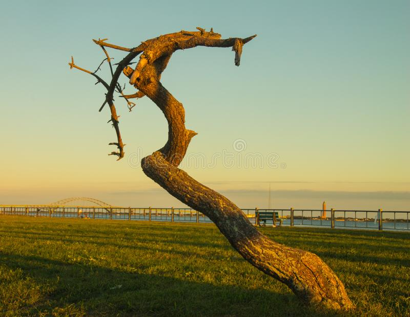 Withered old tree stands guard at the beach at dusk stock photo