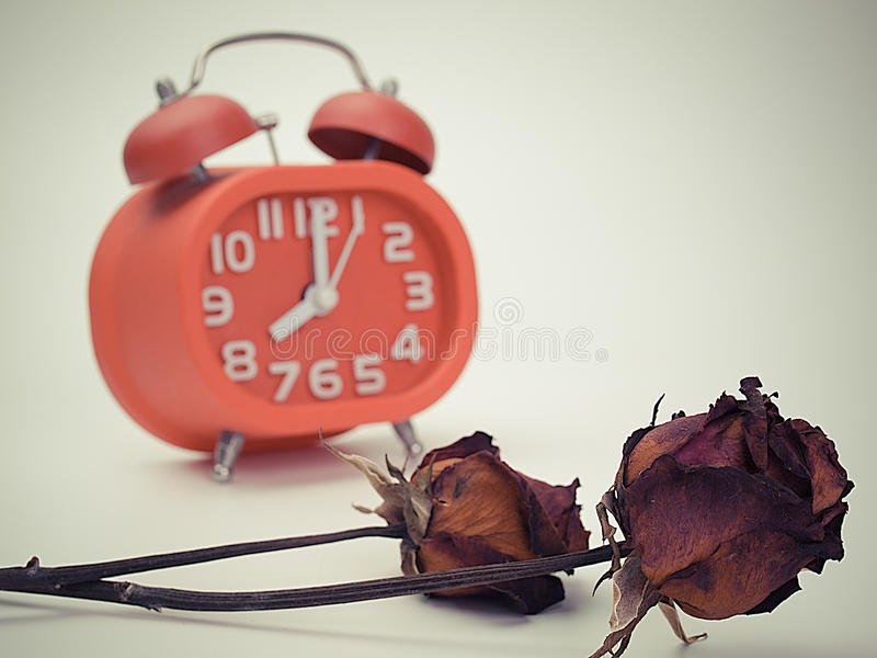 Withered red rose. death flower and watch time. Vintage stock image