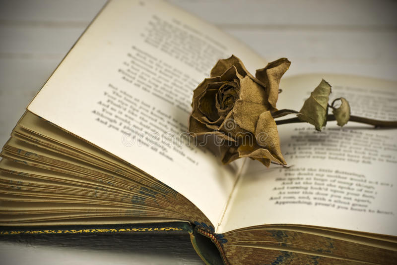 Withered rose on book stock photos