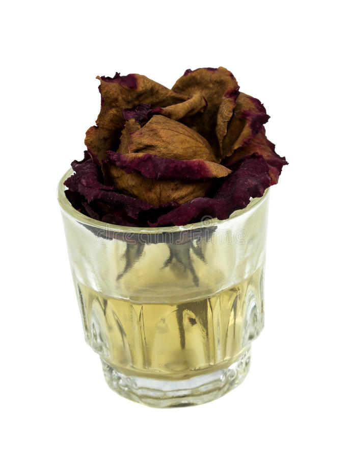 Withered rose in glass royalty free stock images