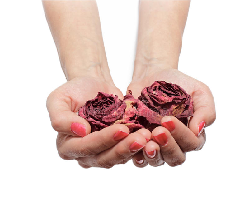 Download Withered Roses Stock Photo - Image: 26472550