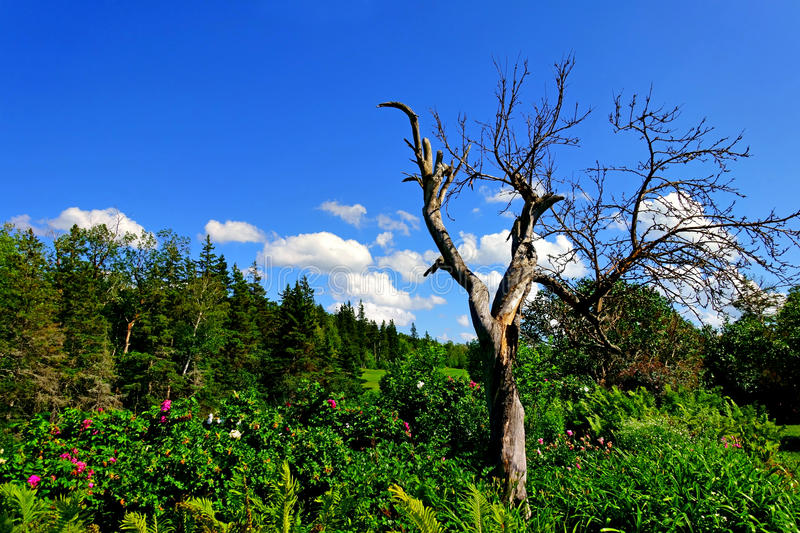 Withered tree in the garden stock photo