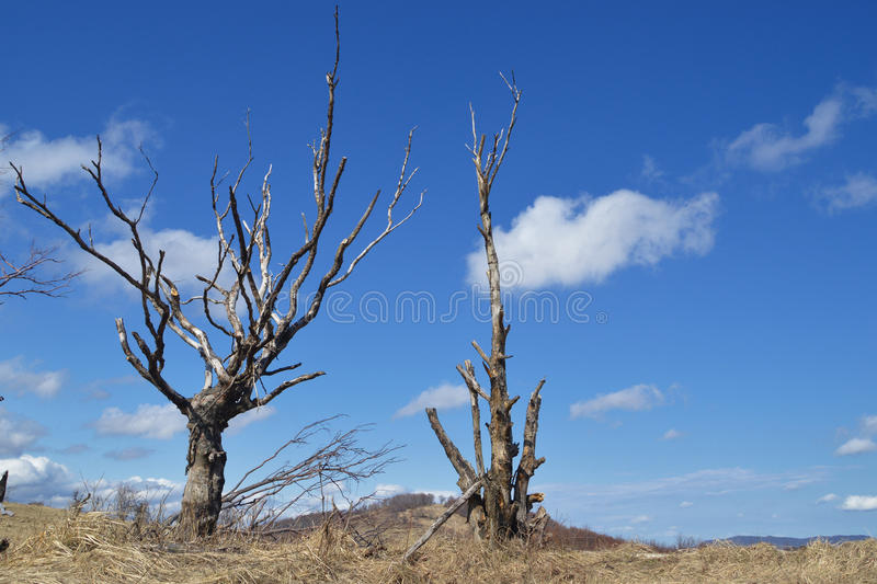 Withered tree stock photo. Image of land, national ...