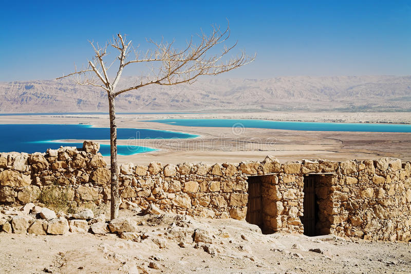Withered tree in Masada, Israel. Withered tree in the fortress Masada near the Dead Sea, Israel royalty free stock photos
