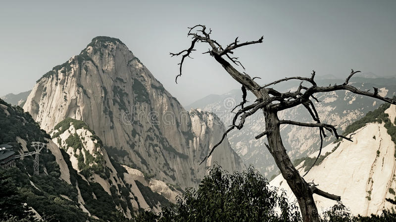 Withered tree and mountain. In Mount Hua Scenic Area.Phto taken in July 21, 2015 royalty free stock image