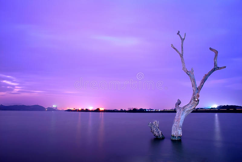 Withered tree. In the river at nightfall royalty free stock photos
