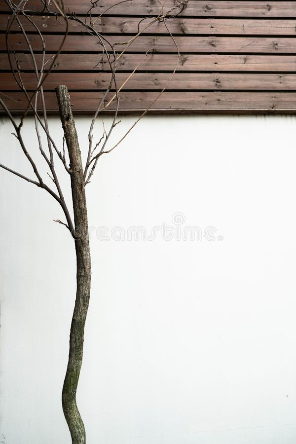 Withered tree. Very unique withered tree and the wall in the art apace stock photography