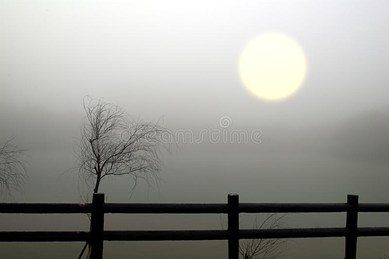 Withered, and the un-clear sun. In the fog (like a painting royalty free stock images