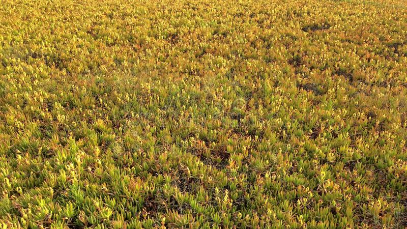 Withering plants. Background of wilting plants, field plants, thick carpet of grasses royalty free stock photography