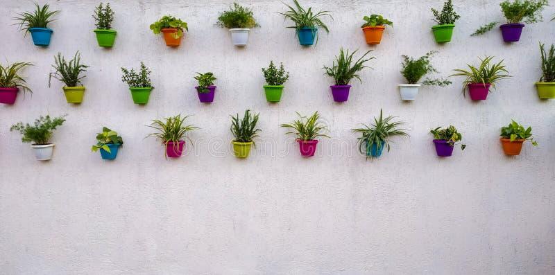 witte bakstenen muur met kleurrijke installaties en potten die op het hangen royalty-vrije stock foto