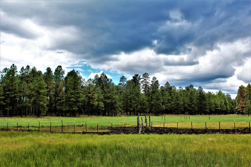 Witte Berg, Pinetop Lakeside, Arizona, Verenigde Staten stock foto's