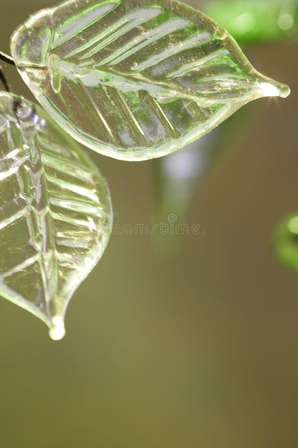Witte bladeren stock foto