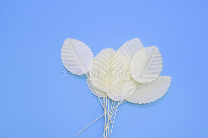 Witte bladeren op een tak op een blauwe achtergrond, een plaats voor tekst stock afbeelding