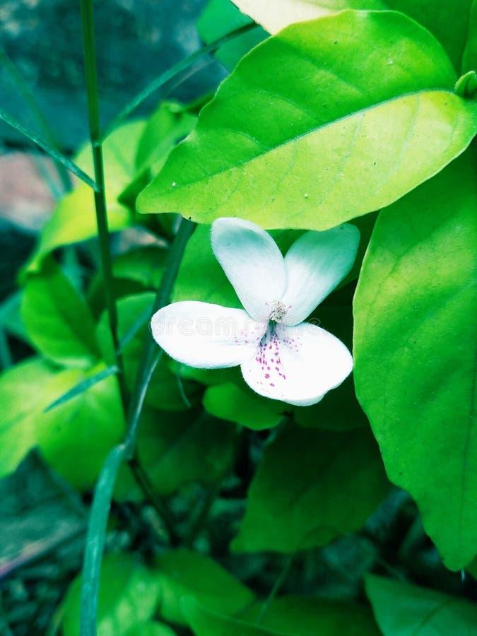 witte bloem in één of andere bewerkingsmodus stock foto's