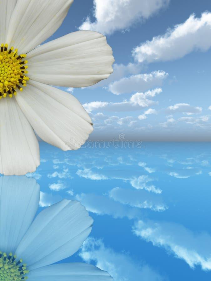 Witte bloem stock illustratie