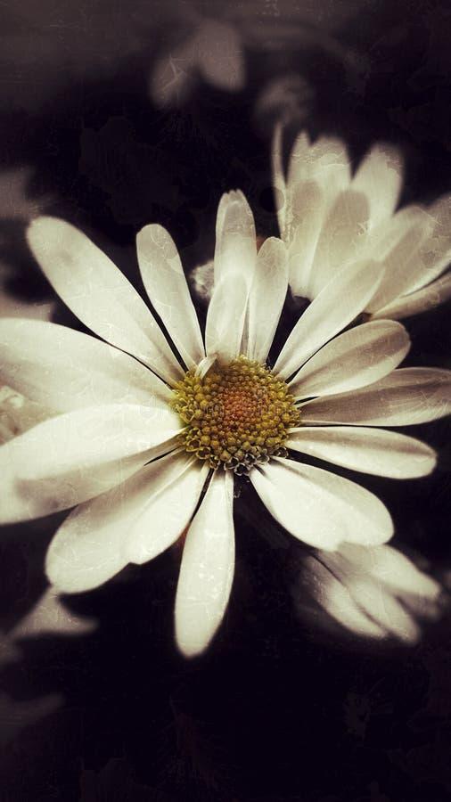 Witte bloem royalty-vrije stock fotografie