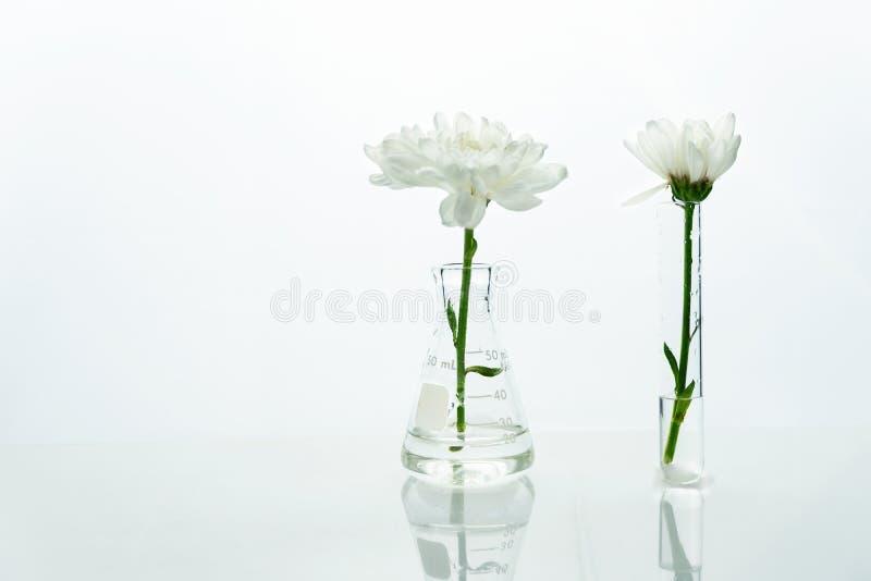 Witte bloem in de glasfles en reageerbuis in het schone medische laboratorium van de biotechnologiewetenschap royalty-vrije stock afbeelding