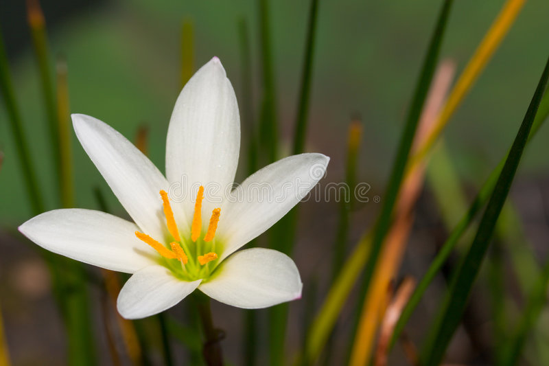 Witte bloem dichte omhooggaand royalty-vrije stock afbeelding