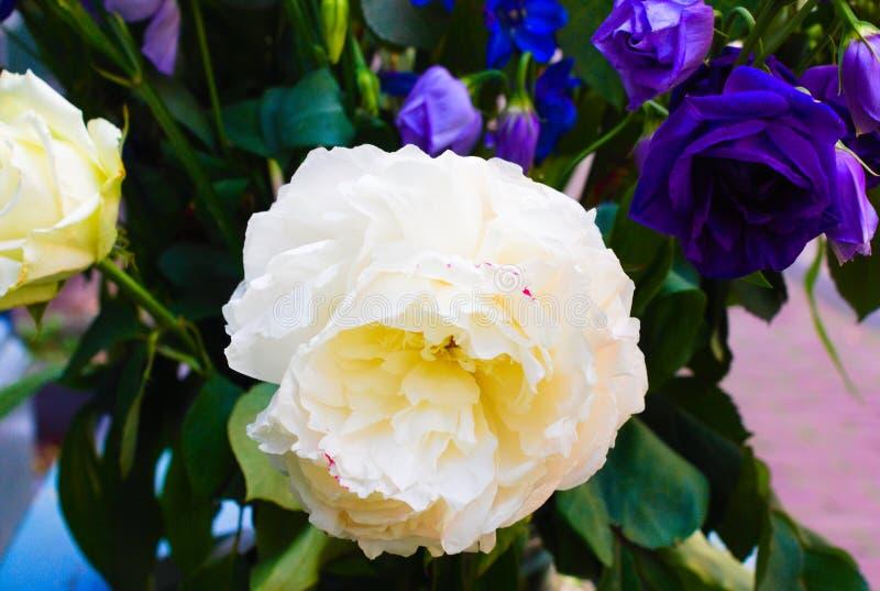 Witte bloem die in de zomer met langzaam verdwenen achtergrond bloeien stock foto's
