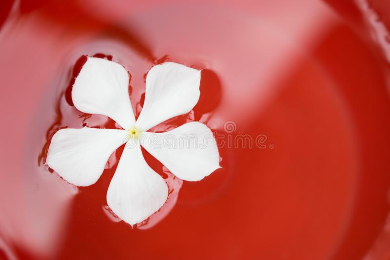 Witte bloem die in rode verf zwemmen royalty-vrije stock afbeeldingen