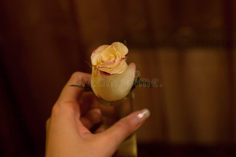 Witte bloem in een vrouwelijke hand stock afbeeldingen