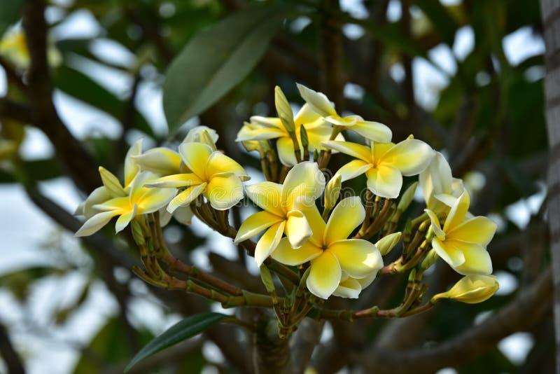 Witte bloem of gele bloem stock afbeelding