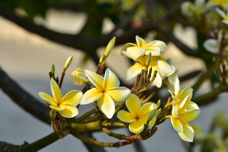 Witte bloem of gele bloem royalty-vrije stock afbeelding