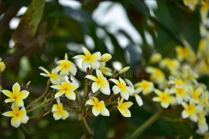 Witte bloem of gele bloem stock foto's