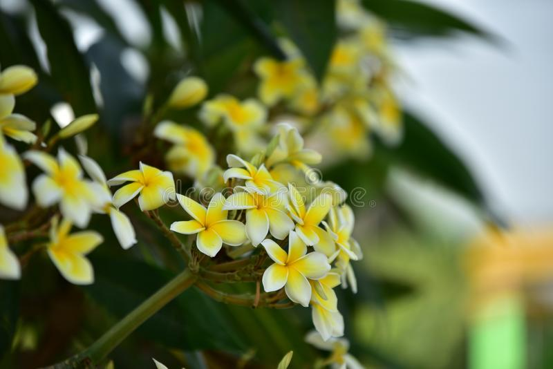 Witte bloem of gele bloem royalty-vrije stock foto's