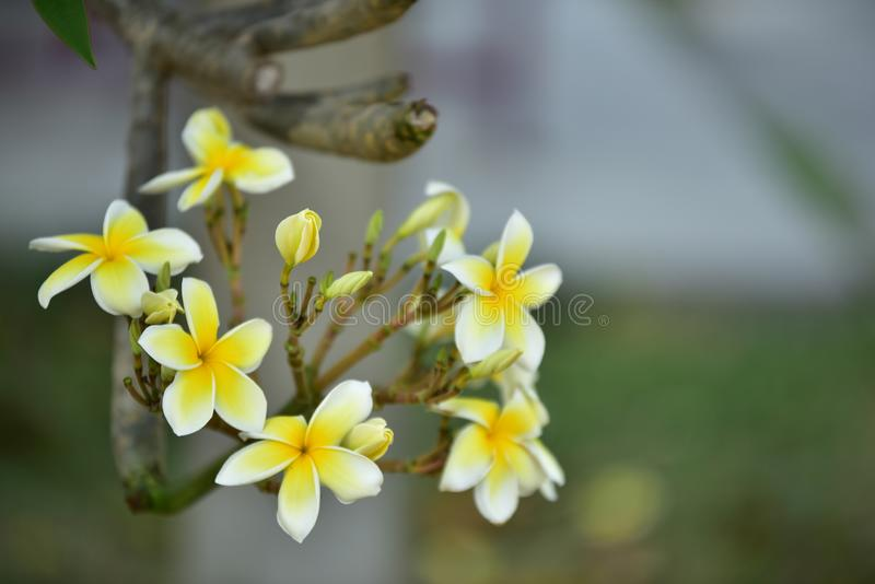 Witte bloem of gele bloem royalty-vrije stock fotografie