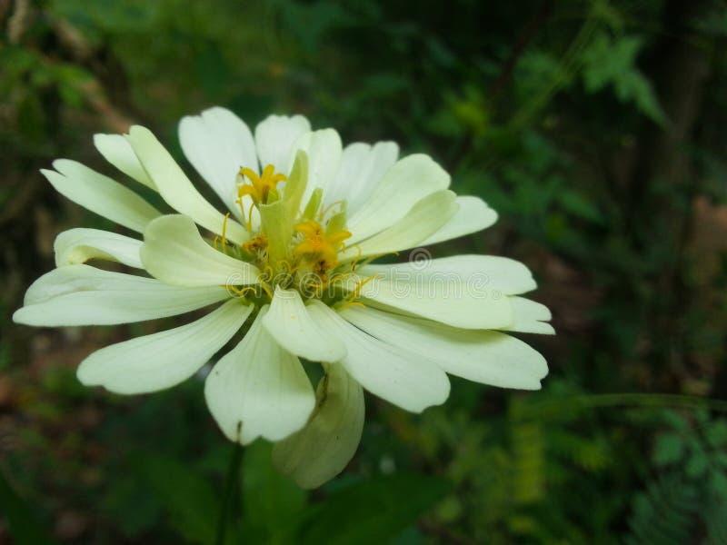 Witte bloem met groene achtergrond royalty-vrije stock foto's