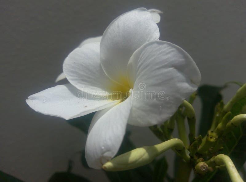 Witte Bloem met Grote Gele Schaduw stock afbeelding