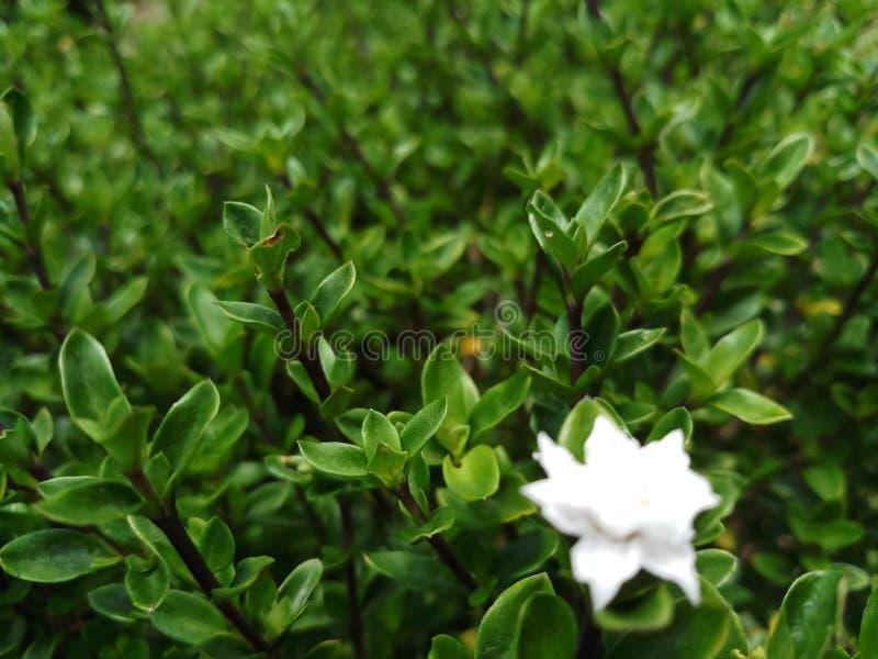 Witte bloem onder groene bladeren royalty-vrije stock afbeelding
