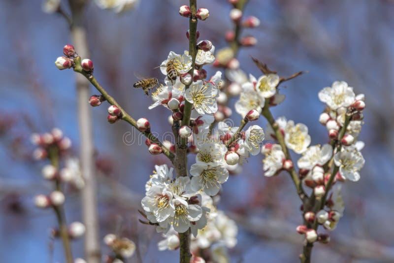 Witte bloem op de boom royalty-vrije stock foto