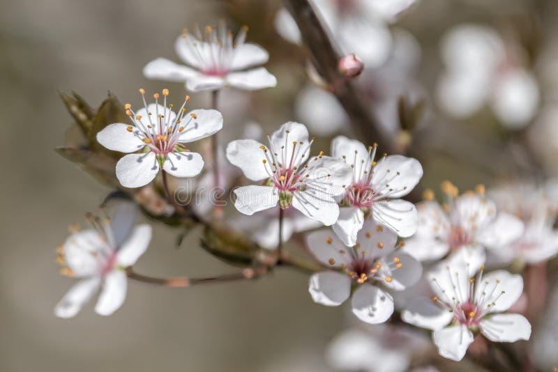 Witte bloem op de boom royalty-vrije stock afbeelding