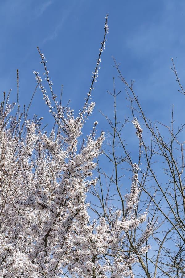 Witte bloem op de boom stock afbeeldingen