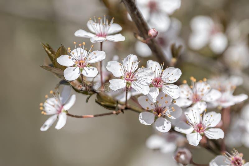 Witte bloem op de boom royalty-vrije stock afbeeldingen