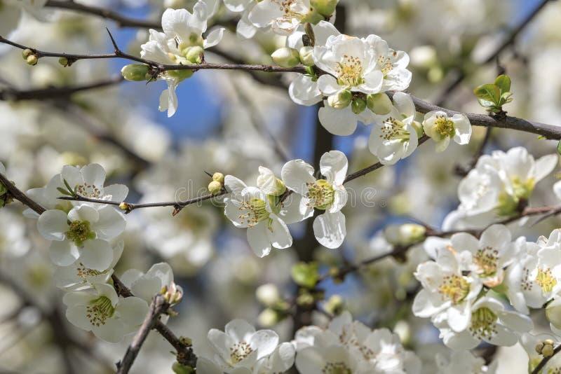Witte bloem op de boom royalty-vrije stock foto's
