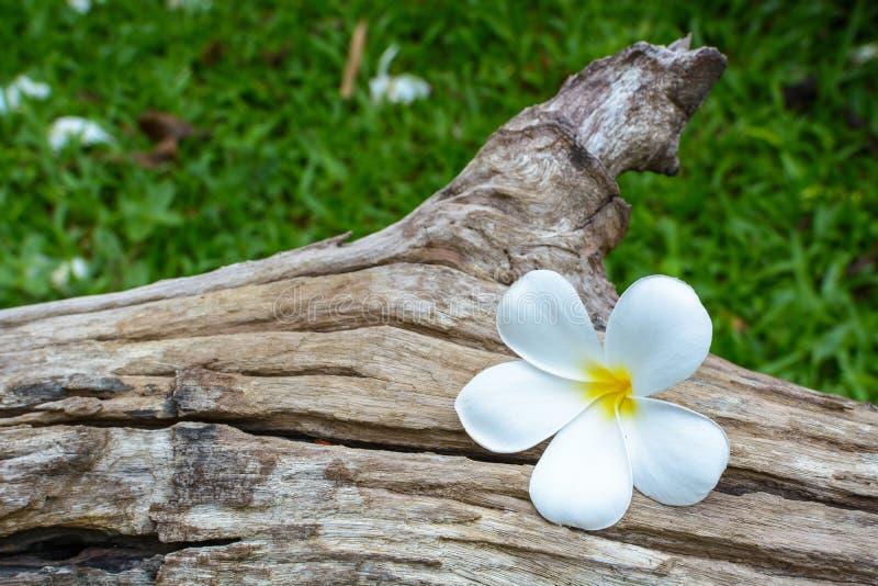 Witte bloem op oud hout royalty-vrije stock foto